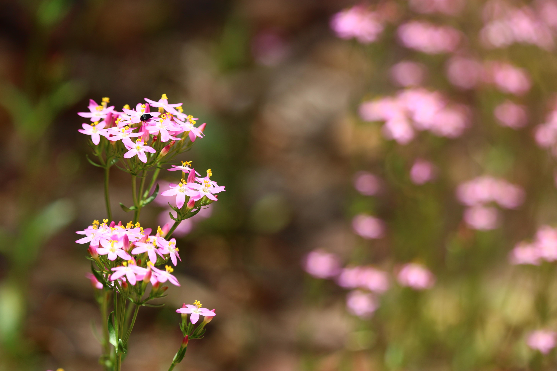 Flowers near Masons Falls