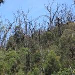 Tree tops near Masons Falls